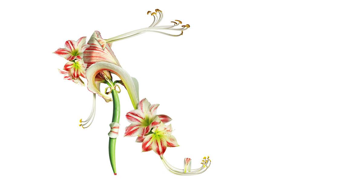 Shoe Fleur 12