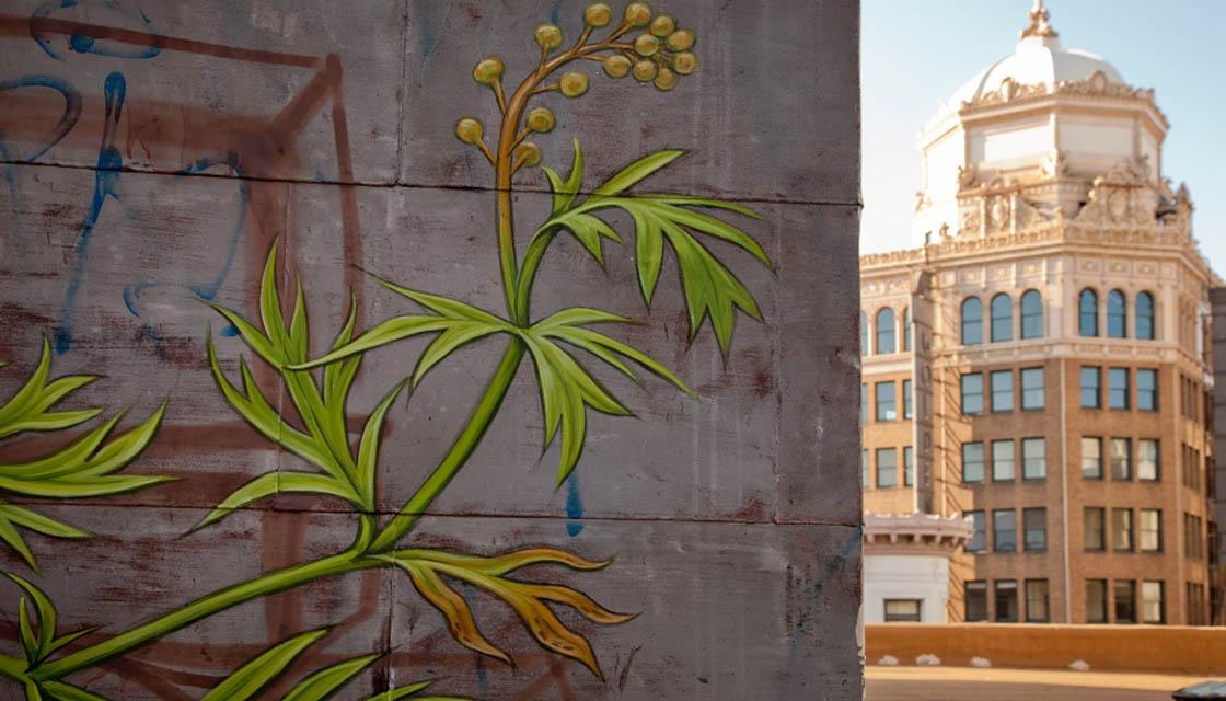 Weed Murals 2