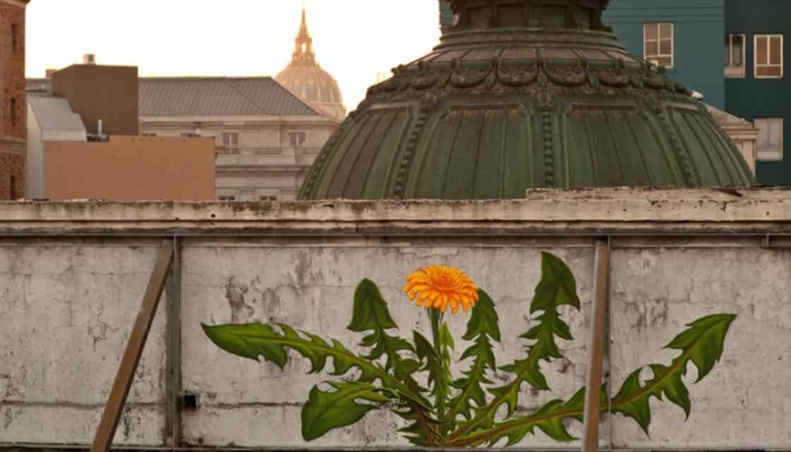 Weed murals 1
